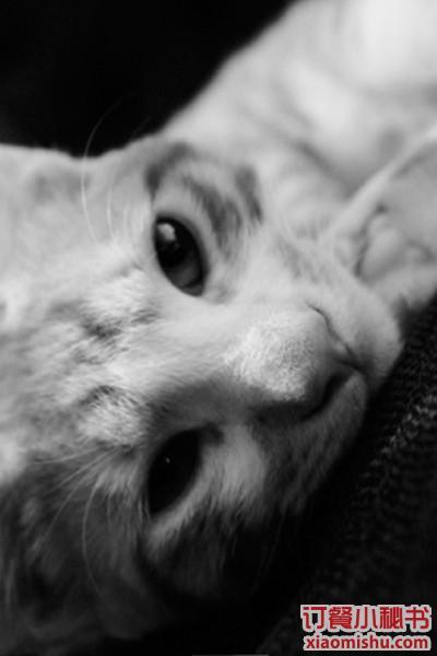 店里有两只可爱的小懒猫